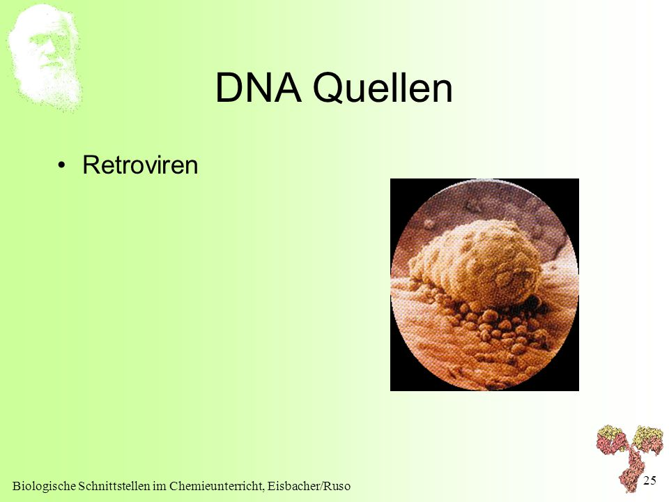 DNA Quellen Retroviren