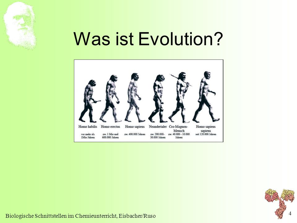 Was ist Evolution Biologische Schnittstellen im Chemieunterricht, Eisbacher/Ruso