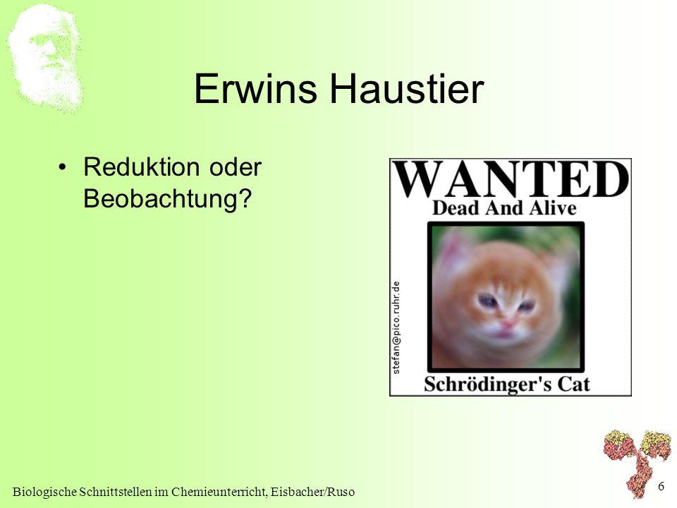 Erwins Haustier Reduktion oder Beobachtung