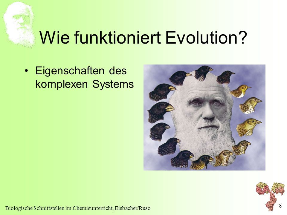 Wie funktioniert Evolution