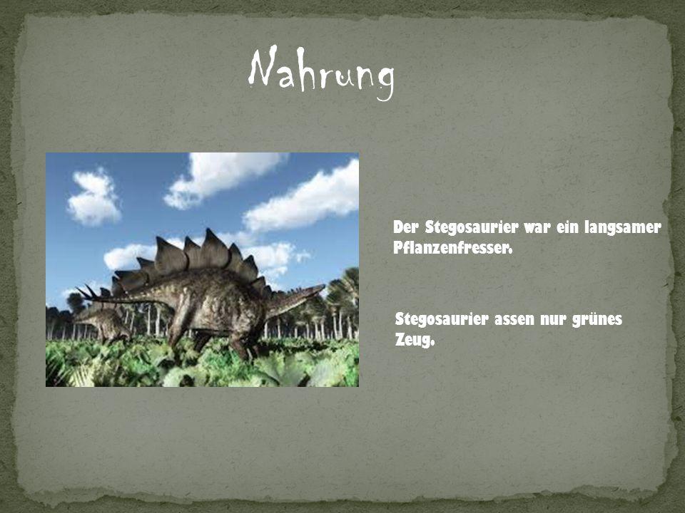 Nahrung Der Stegosaurier war ein langsamer Pflanzenfresser.