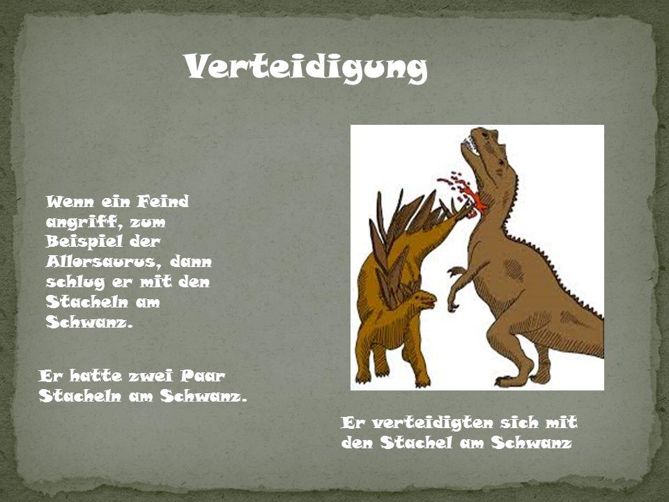 Verteidigung Wenn ein Feind angriff, zum Beispiel der Allorsaurus, dann schlug er mit den Stacheln am Schwanz.