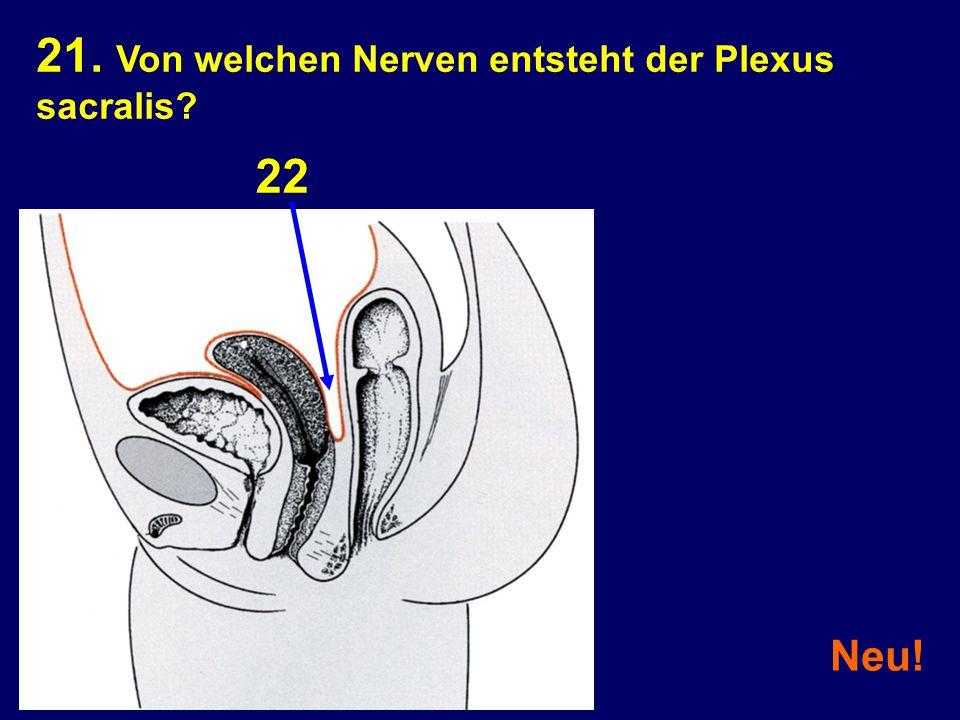 21. Von welchen Nerven entsteht der Plexus sacralis
