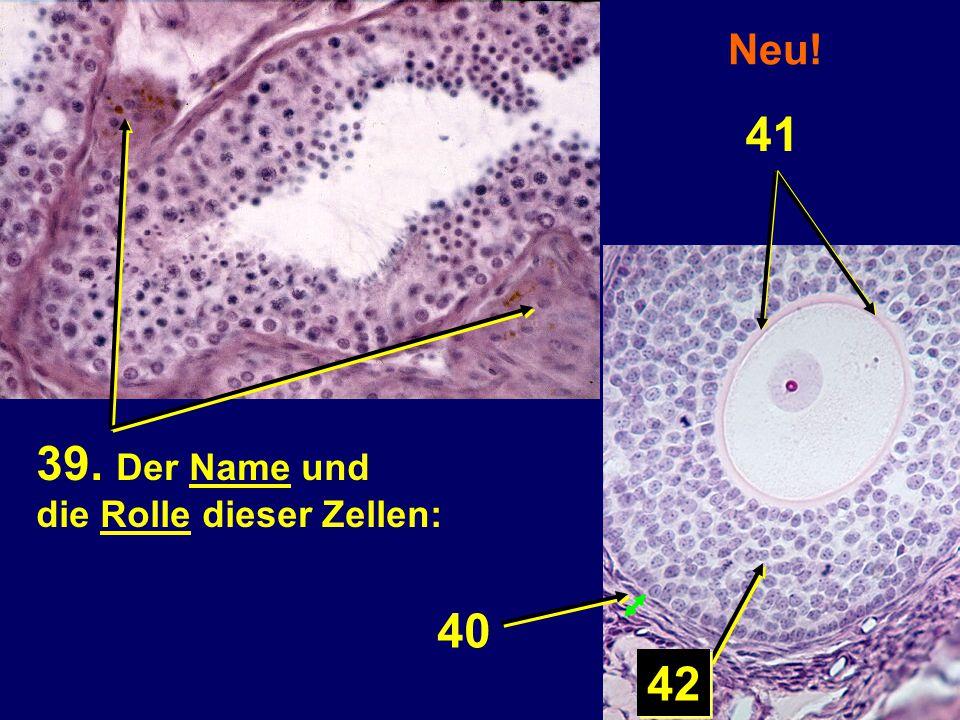 Neu! 41 39. Der Name und die Rolle dieser Zellen: 40 42