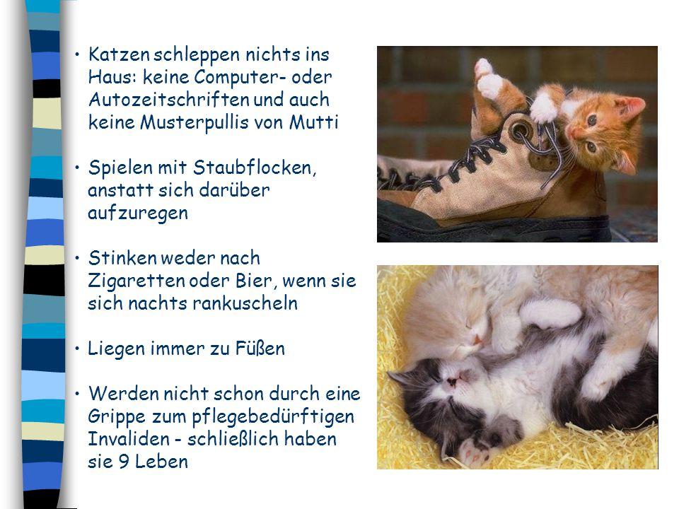 Katzen schleppen nichts ins Haus: keine Computer- oder Autozeitschriften und auch keine Musterpullis von Mutti