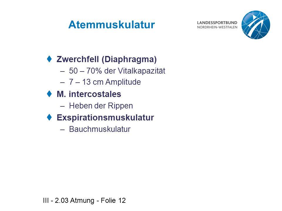 Atemmuskulatur Zwerchfell (Diaphragma) M. intercostales