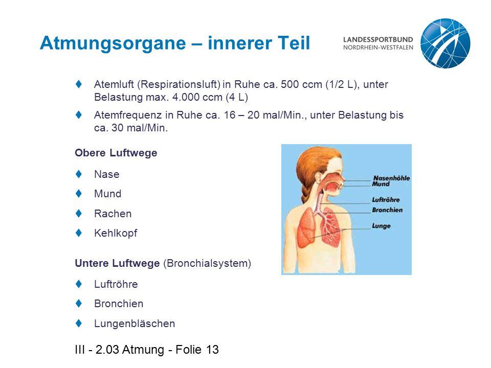 Atmungsorgane – innerer Teil