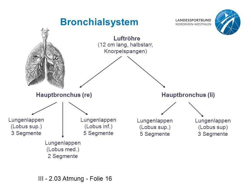 Bronchialsystem III - 2.03 Atmung - Folie 16 Luftröhre