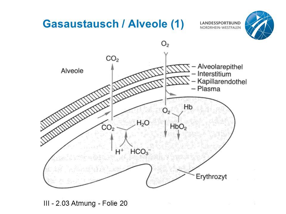 Gasaustausch / Alveole (1)