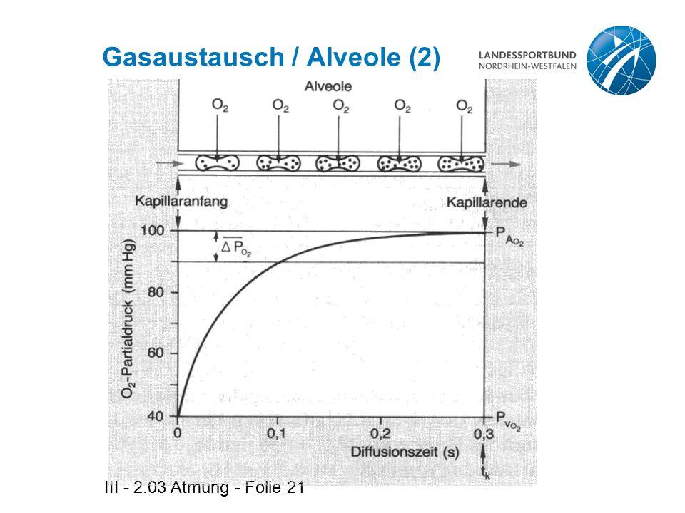 Gasaustausch / Alveole (2)