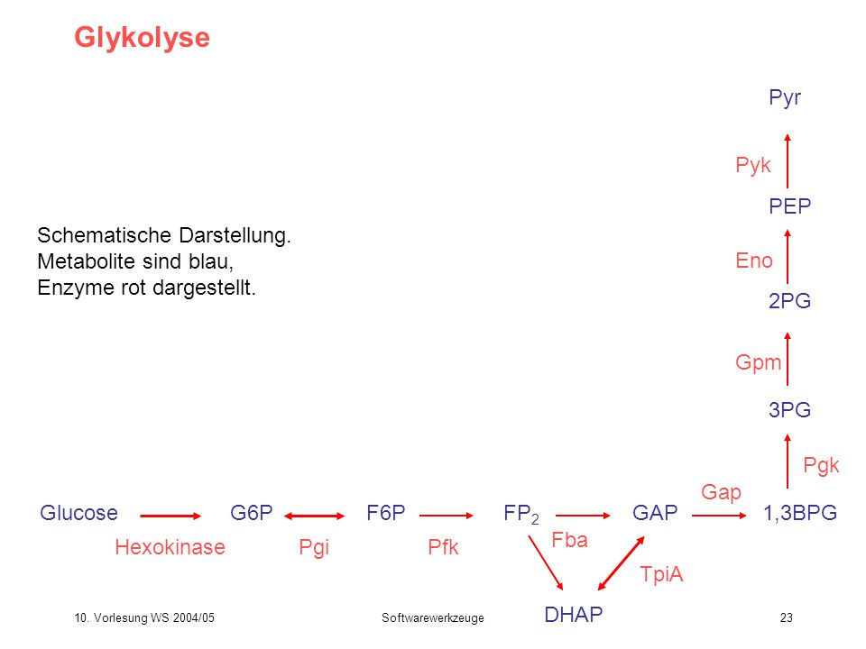 Glykolyse Pyr Pyk PEP Schematische Darstellung. Metabolite sind blau,