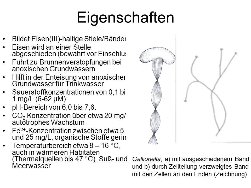 Eigenschaften Bildet Eisen(III)-haltige Stiele/Bänder