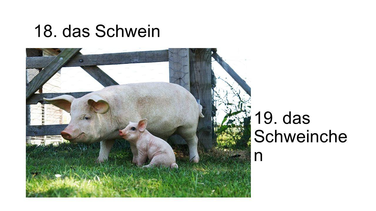18. das Schwein 19. das Schweinchen