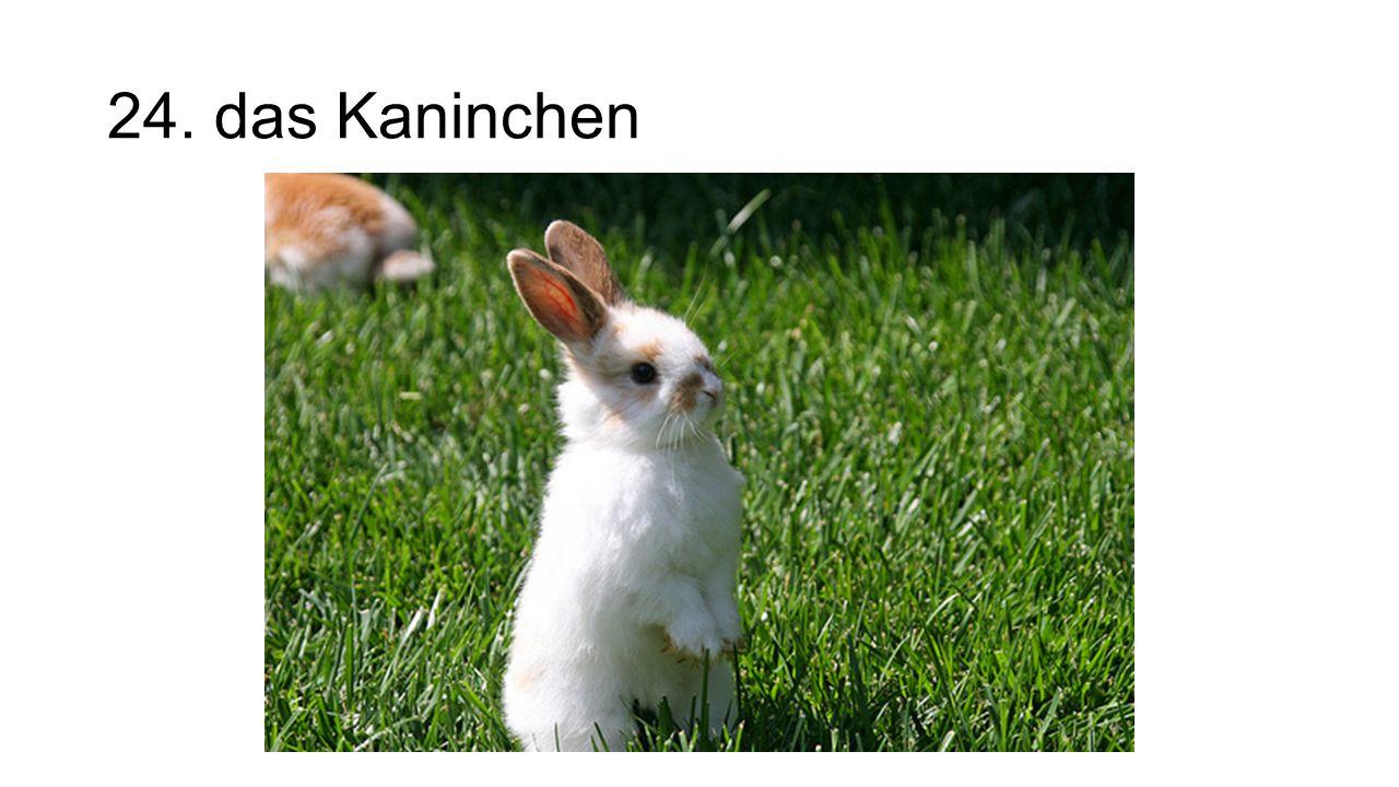 24. das Kaninchen The rabbit/bunny