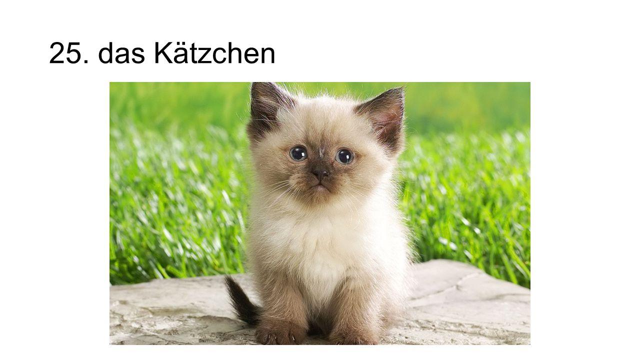 25. das Kätzchen The kitten
