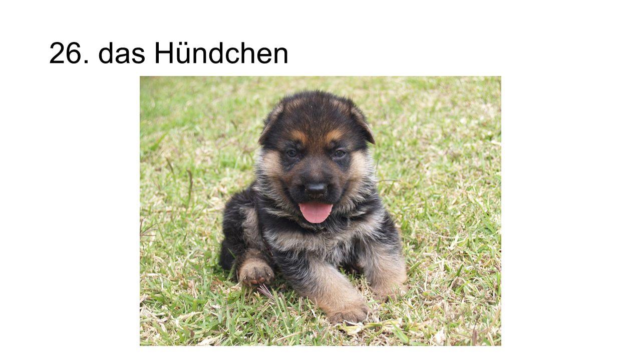 26. das Hündchen The puppy