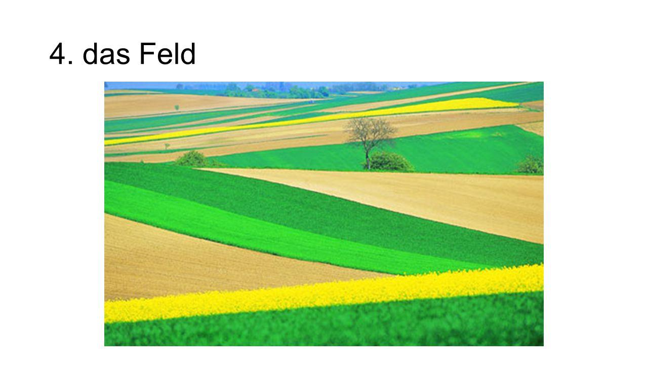 4. das Feld The field
