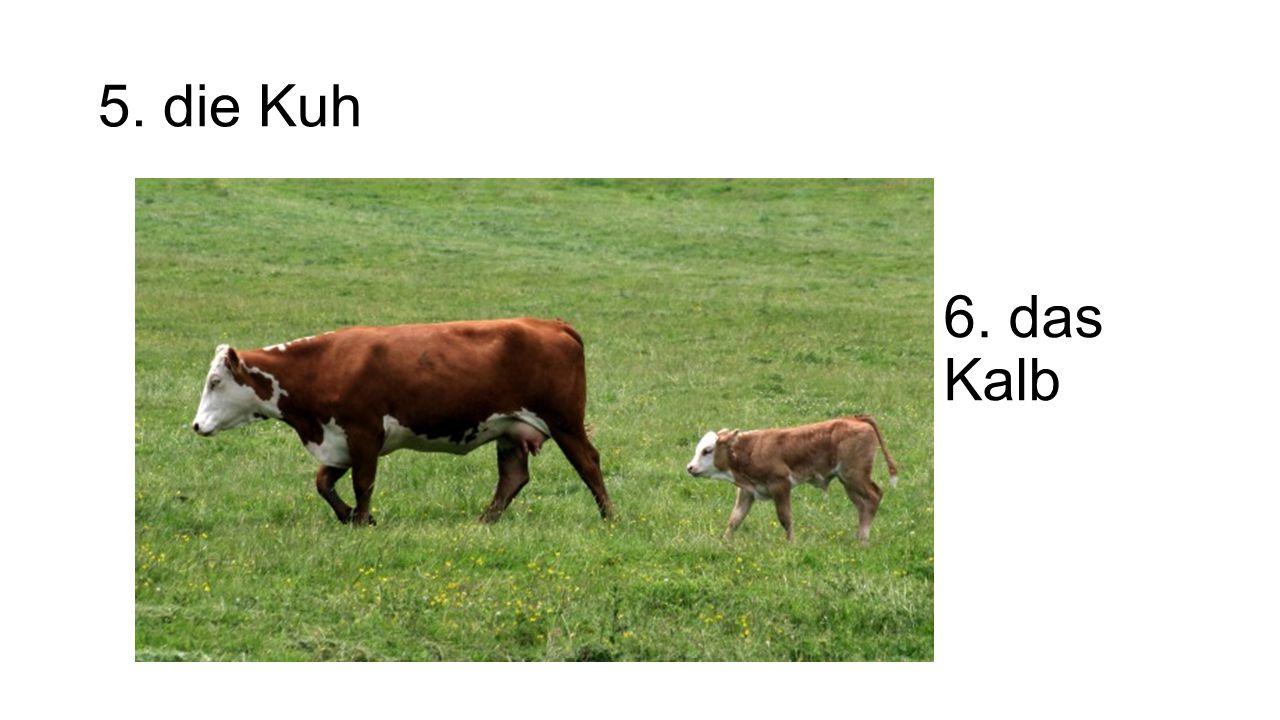 5. die Kuh 6. das Kalb