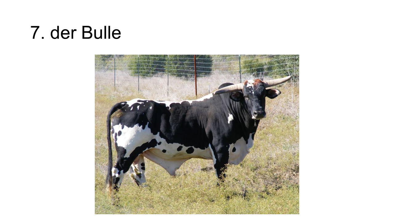 7. der Bulle