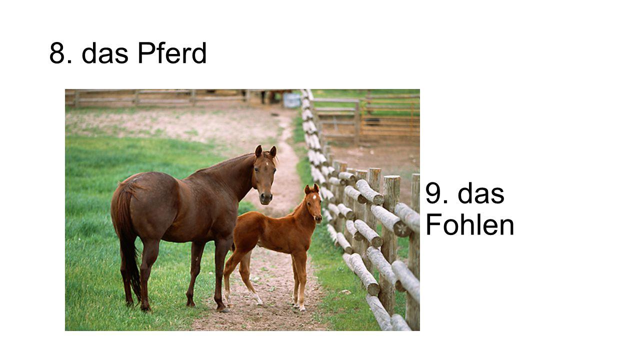 8. das Pferd 9. das Fohlen