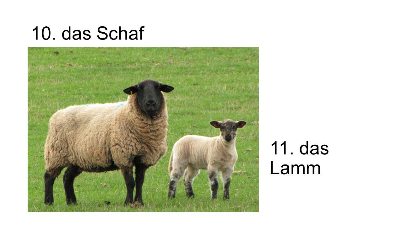10. das Schaf 11. das Lamm