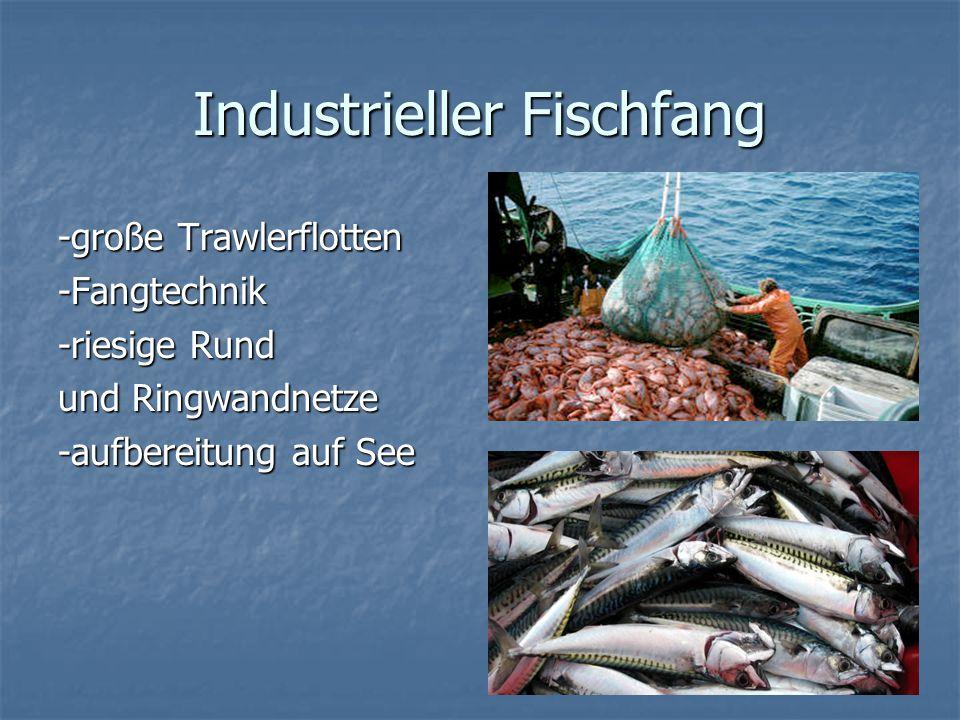 Industrieller Fischfang