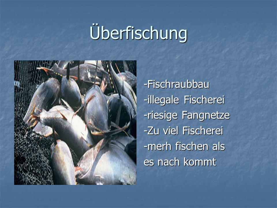 Überfischung -Fischraubbau -illegale Fischerei -riesige Fangnetze