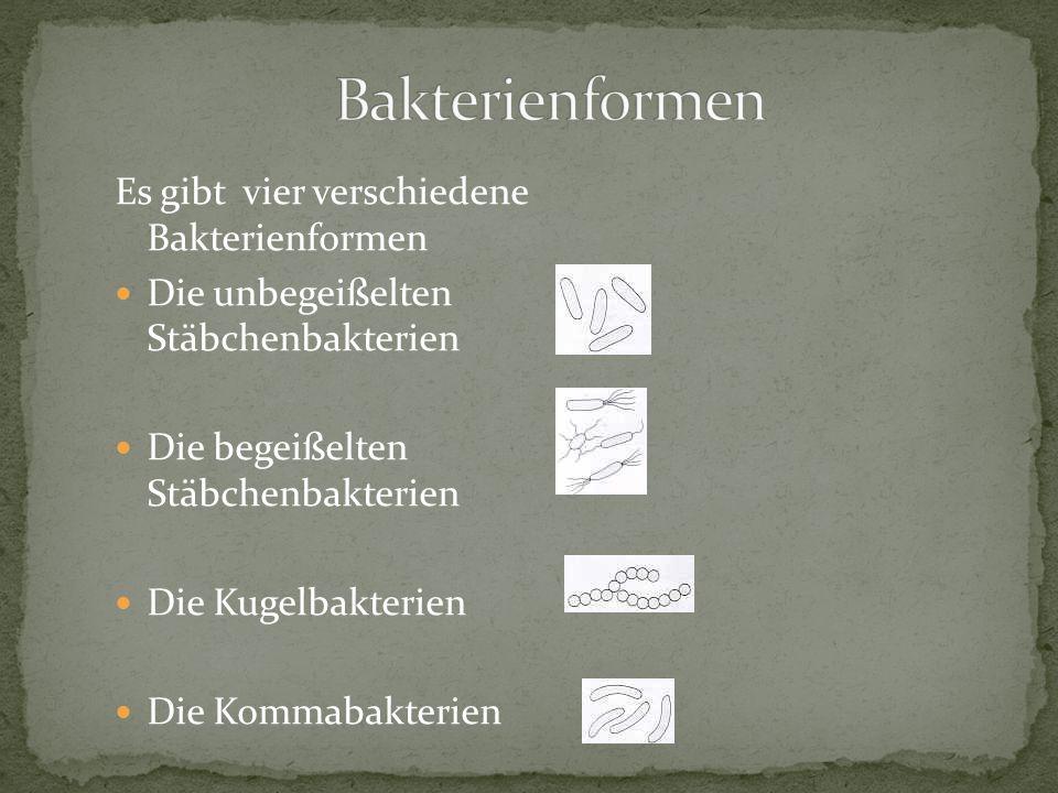 Bakterienformen Es gibt vier verschiedene Bakterienformen