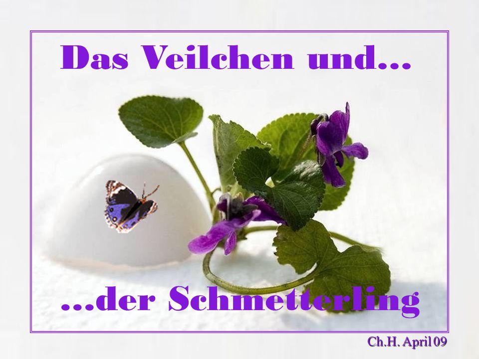 Das Veilchen und… …der Schmetterling Ch.H. April 09