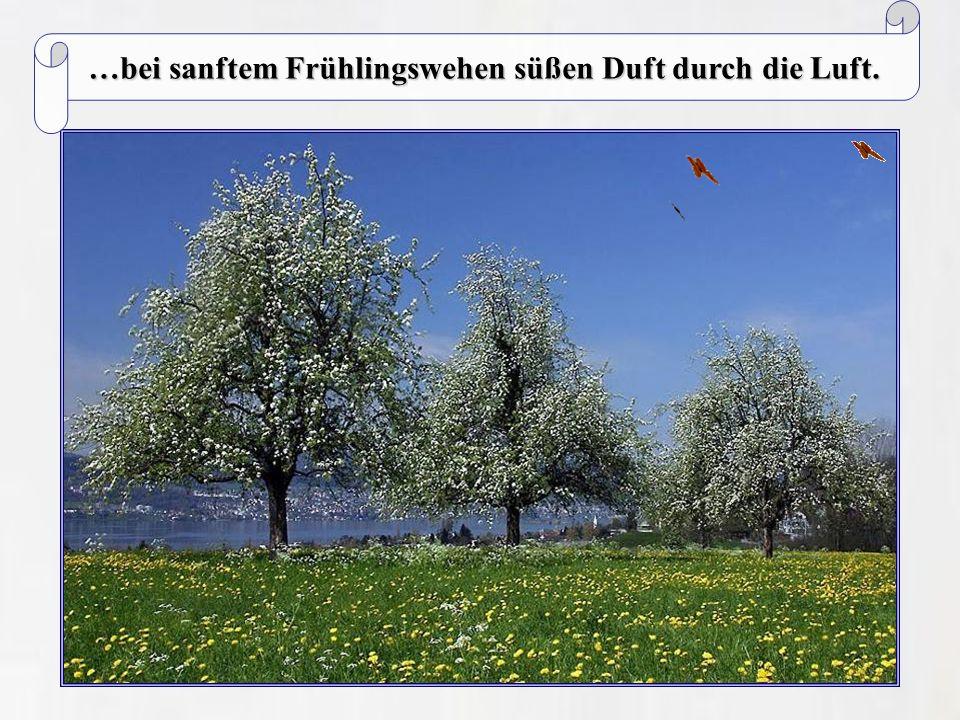 …bei sanftem Frühlingswehen süßen Duft durch die Luft.