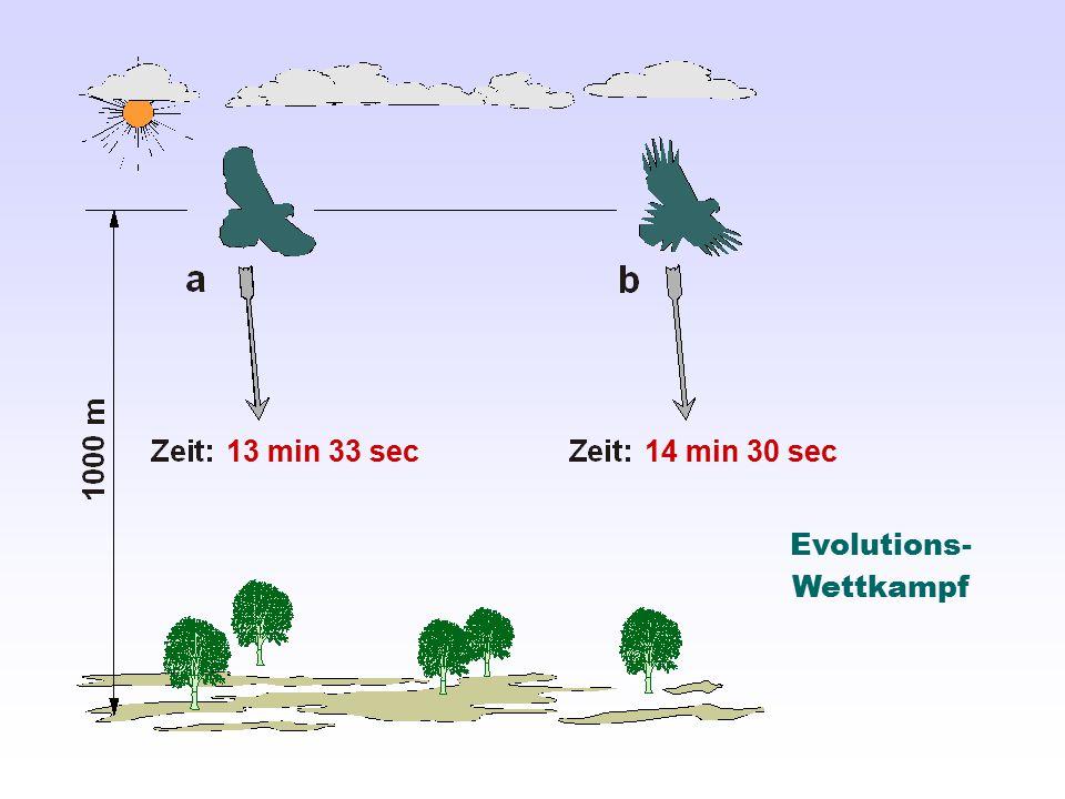 Evolutions- Wettkampf