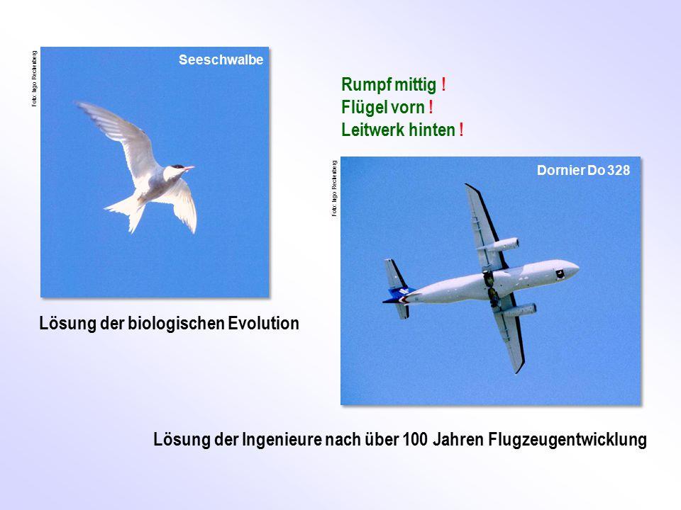 Lösung der biologischen Evolution