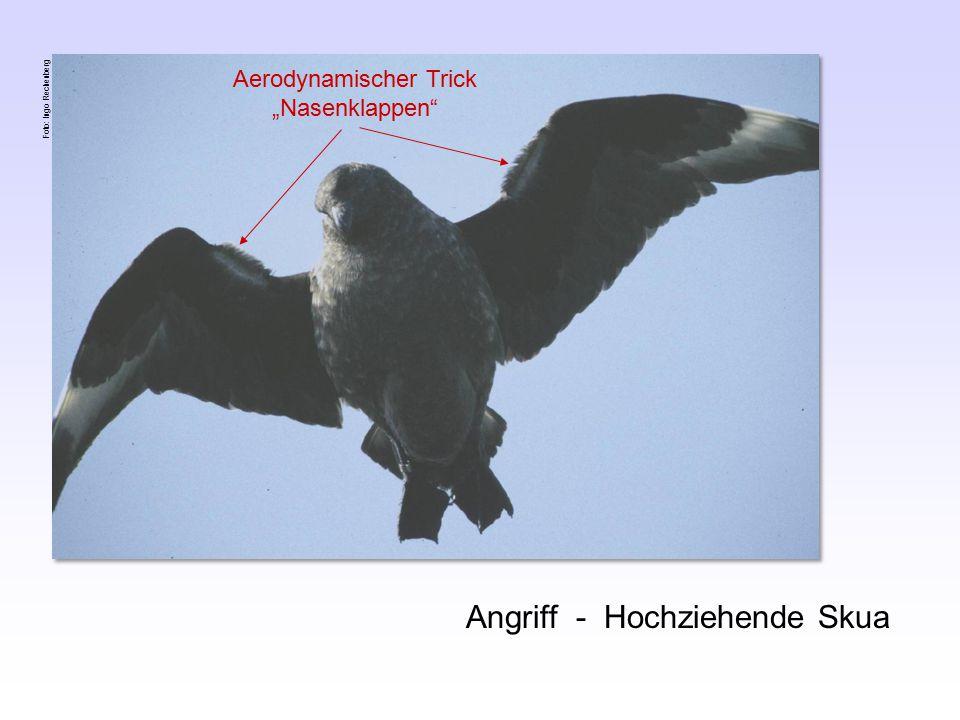 "Aerodynamischer Trick ""Nasenklappen"