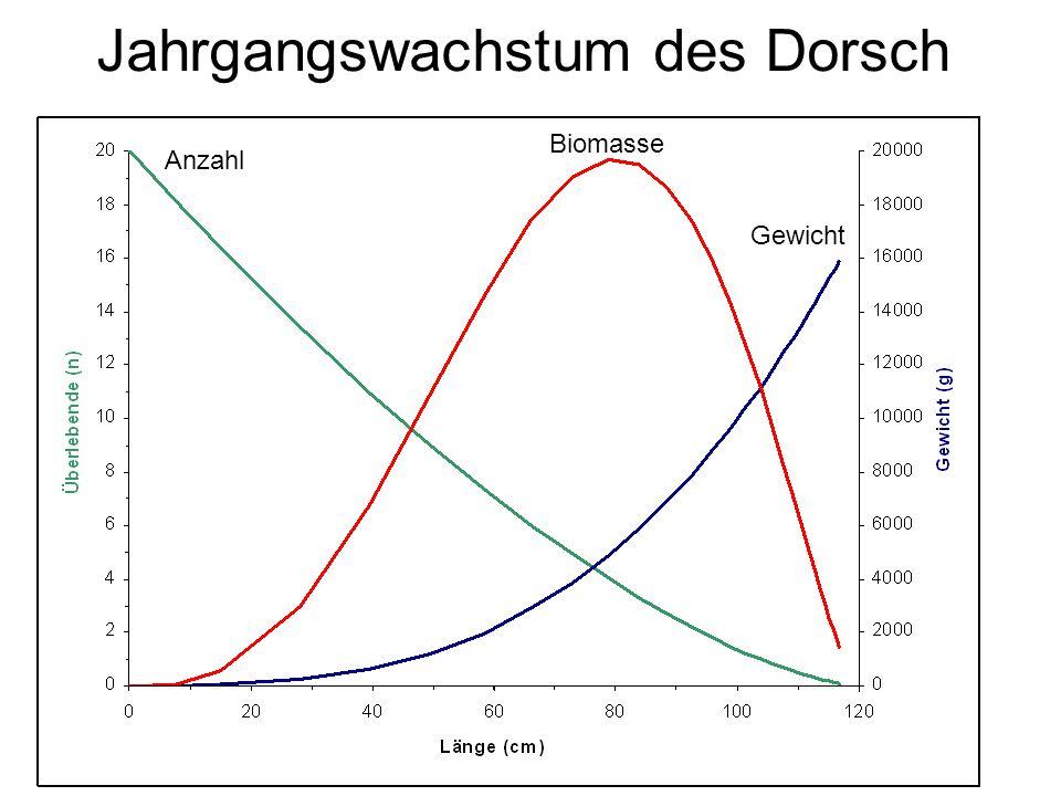 Jahrgangswachstum des Dorsch