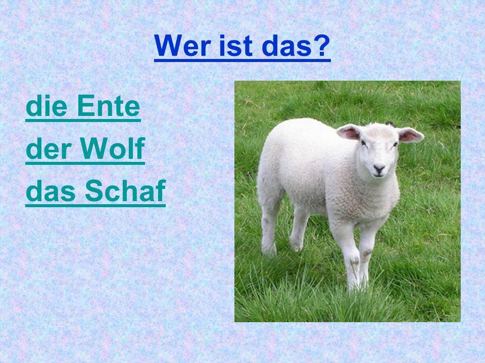 Wer ist das die Ente der Wolf das Schaf