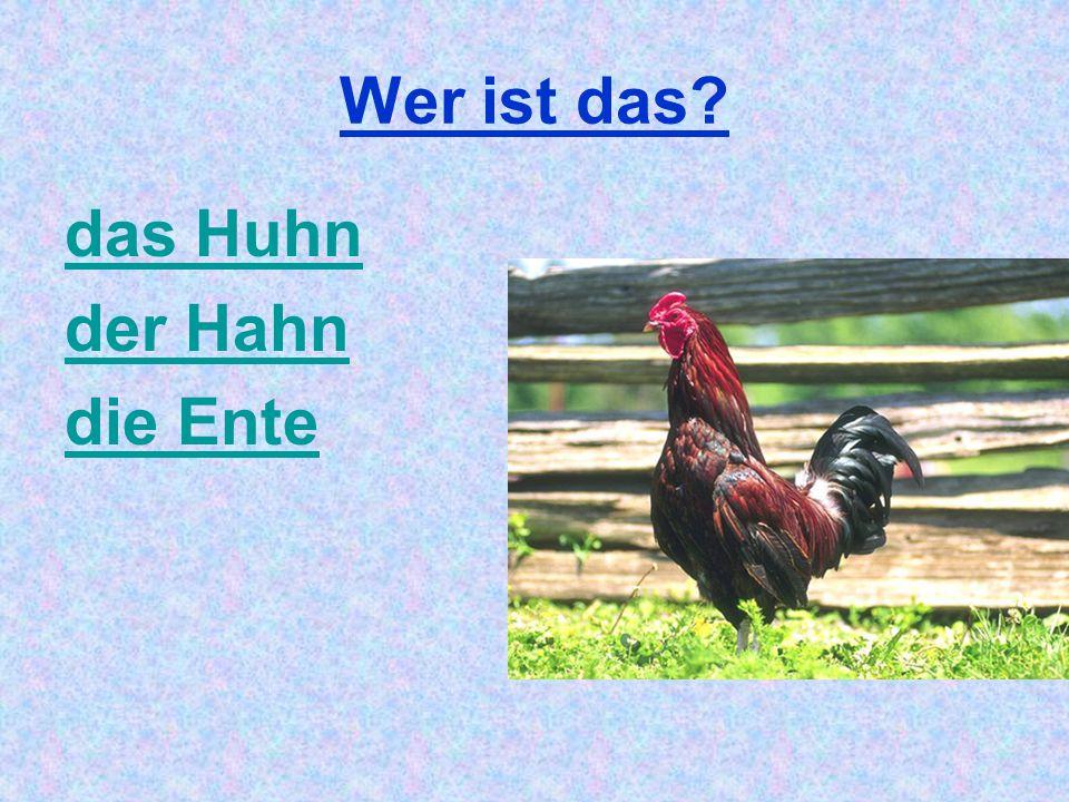Wer ist das das Huhn der Hahn die Ente