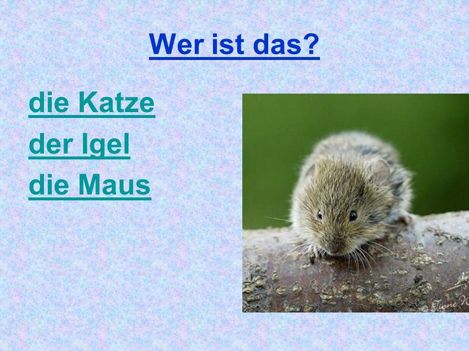 Wer ist das die Katze der Igel die Maus