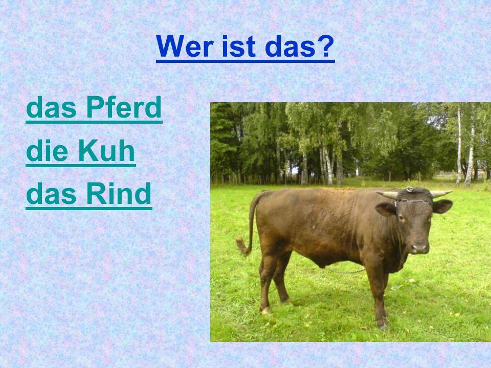 Wer ist das das Pferd die Kuh das Rind