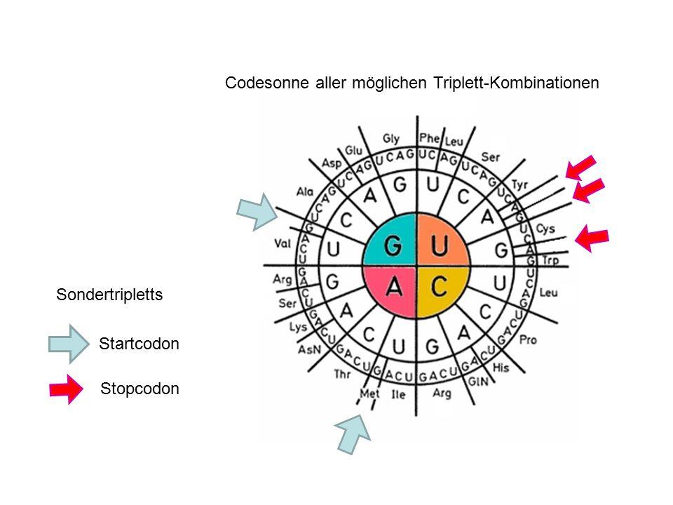 Codesonne aller möglichen Triplett-Kombinationen