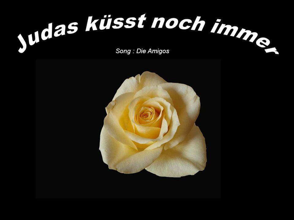 Judas küsst noch immer Song : Die Amigos