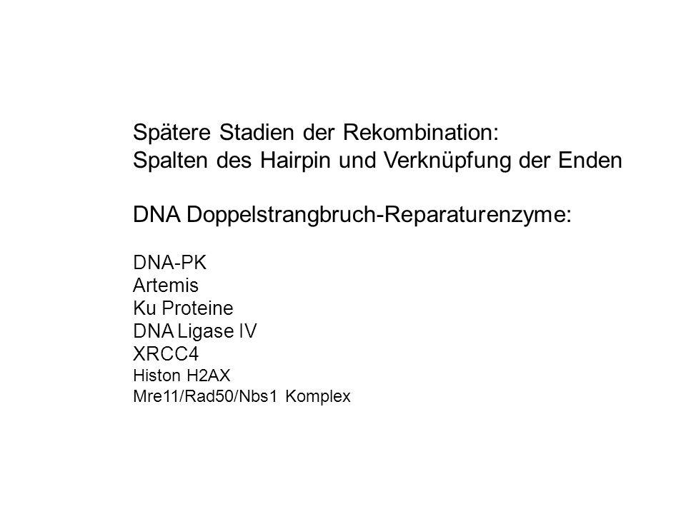 Spätere Stadien der Rekombination: