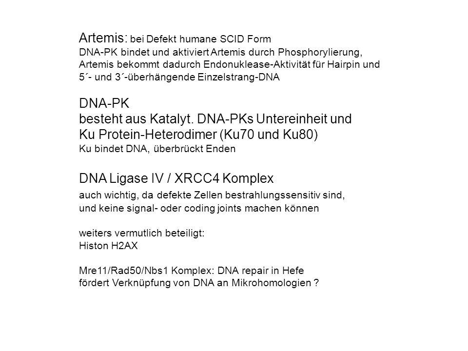 Artemis: bei Defekt humane SCID Form