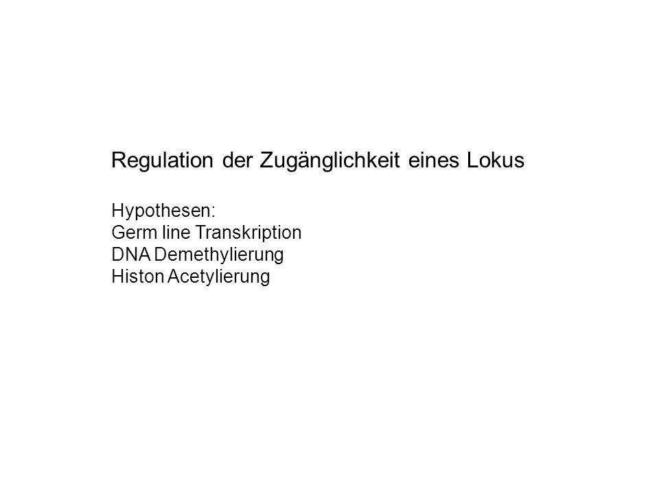 Regulation der Zugänglichkeit eines Lokus