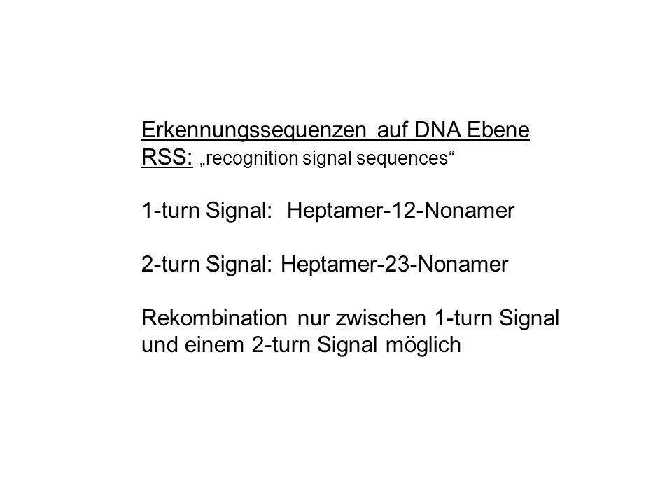 Erkennungssequenzen auf DNA Ebene