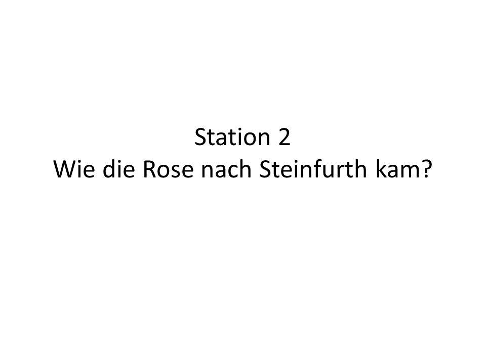 Station 2 Wie die Rose nach Steinfurth kam