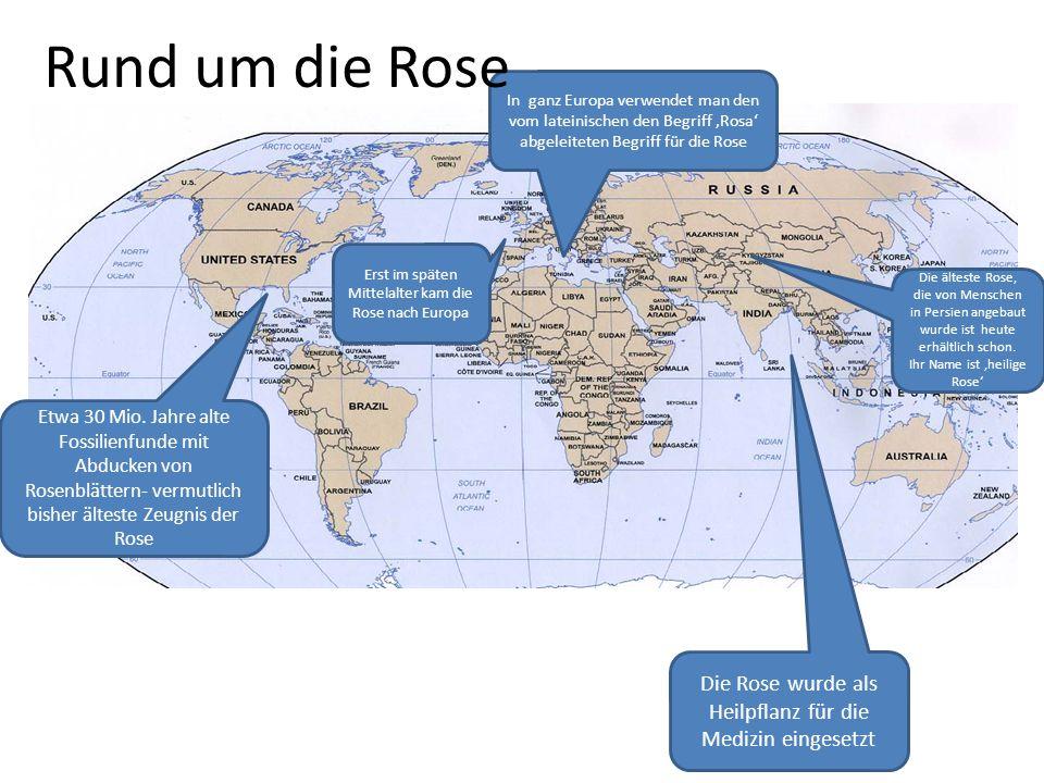 Rund um die Rose In ganz Europa verwendet man den vom lateinischen den Begriff 'Rosa' abgeleiteten Begriff für die Rose.