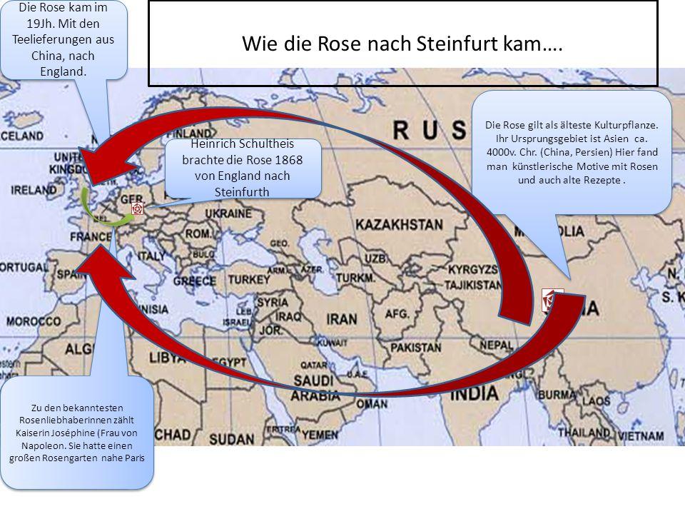 Wie die Rose nach Steinfurt kam….