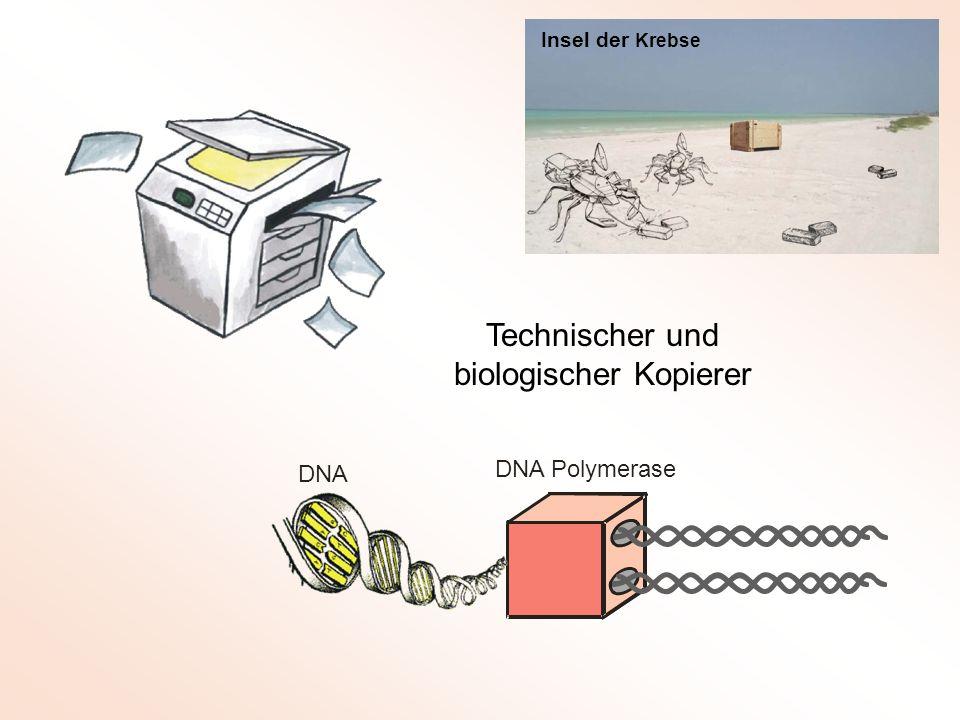 Technischer und biologischer Kopierer