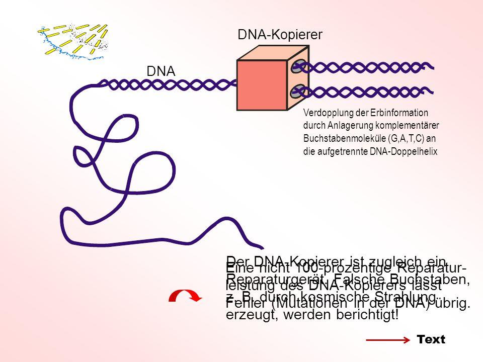 DNA-Kopierer DNA. Verdopplung der Erbinformation durch Anlagerung komplementärer Buchstabenmoleküle (G,A,T,C) an die aufgetrennte DNA-Doppelhelix.