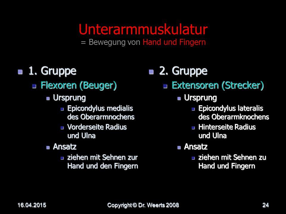 Unterarmmuskulatur = Bewegung von Hand und Fingern